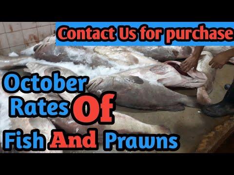 Fish Video | October Rates Fish & Prawn | Karachi Fishery Market