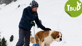 Lawinenhunde (Folge 65) | Tiere bis unters Dach | SWR Kindernetz
