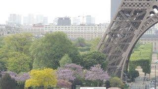 5月のフランス リヨン、パリ マロニエ、桐の花が満開: 桐(中国原産)...