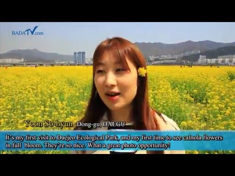 2015 부산 낙동강 유채꽃축제 (Busan Nakdong River Canola Blossoms Festival)
