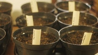 Growing Herbs Indoors & Checking your Seeds for Germination - The Wisconsin Vegetable Gardener