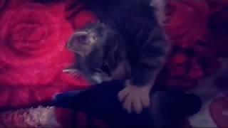 #попугай  #неразлучник  #котенок. Попугай неразлучник Федя и котенок Дымок нераз