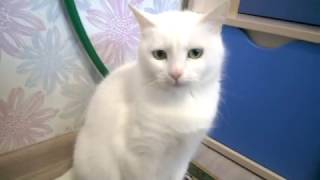 День Рождения Моей Кошки! + рассказываю о Пуле!