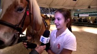 Salon du cheval 2015 - Ecole de voltige