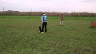 ココの競技会デビュー戦です。初めての競技会でしたが、10課目(CDⅡと...