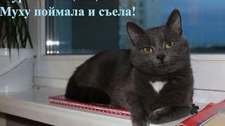 Кошка Мурка питомец Макса и Паши поймала муху и съела
