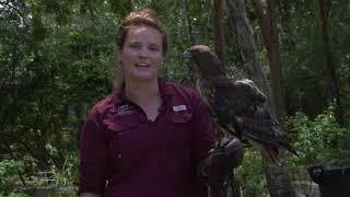 7 11 2018 CROW Bird Ambassador