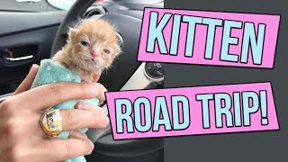 How to Road Trip with Kittens!