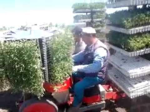 Trapianto pomodori con macchinetta morgillo youtube for Trapianto pomodori