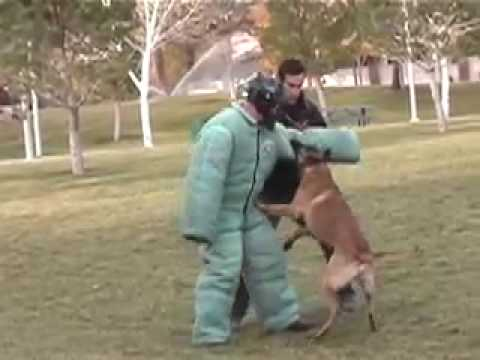 POLICE DOG TRAINING-  DEMO FOR LAS VEGAS  D.A.'S OFFICE