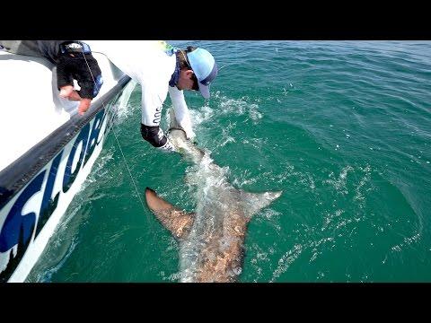 Fishing For Blacktip Sharks During The Migration - Ft. LakeForkGuy