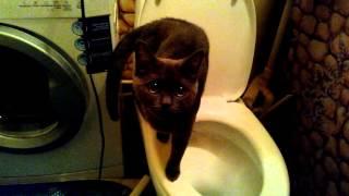 Кошка и унитаз / Cat and a toilet bowl