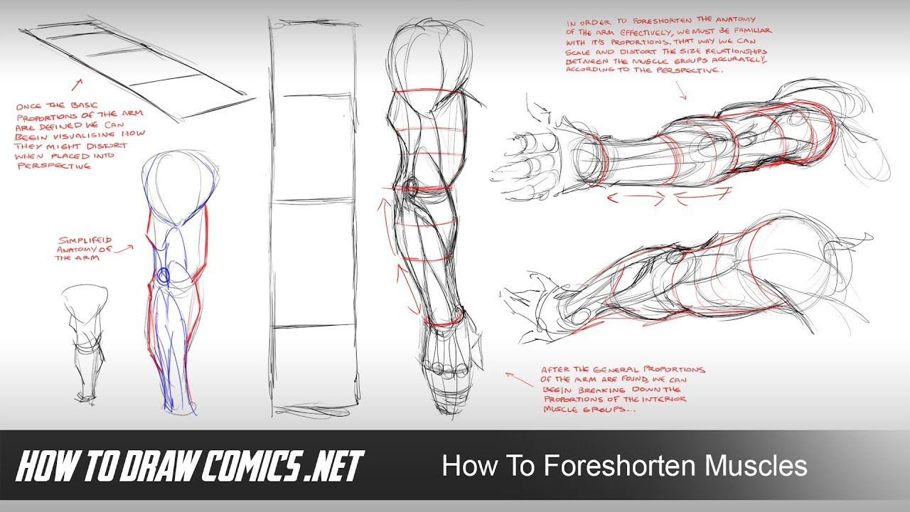 How To Foreshorten Muscles - YouTube