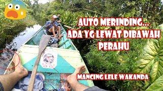 PESTA STRIKE Ikan LELE WAKANDA/LELE BAKUNG/LELE KETUPAT dengan ENDING YG BIKIN MERINDING #67