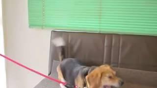 愛犬のなき声、 何か言いたそうです、でも人間には わかりません。