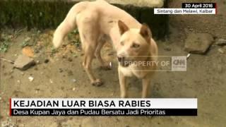 Video Rabies Tewaskan 20 Orang di Kalbar download MP3, 3GP, MP4, WEBM, AVI, FLV Desember 2017