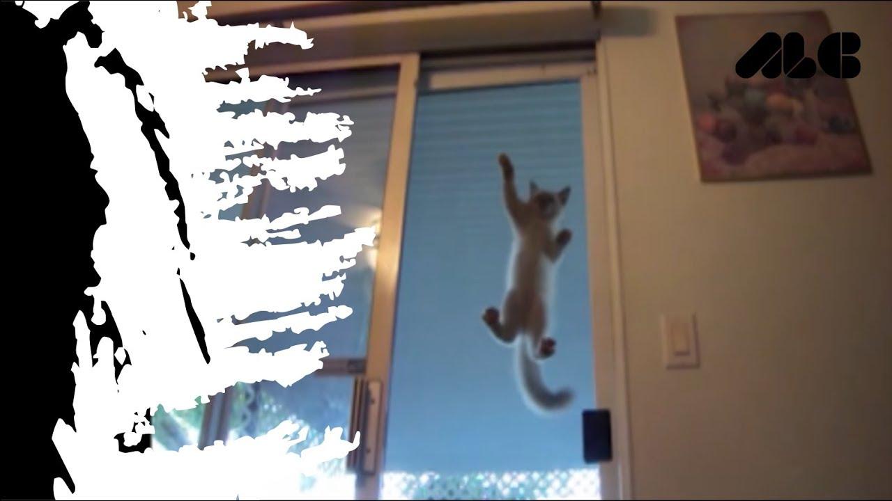 VIDEO LUCU TERBARU humorous cat fail second FUNNY VIDEO