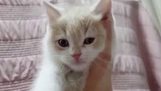 AWSOME FUNNY ANIMAL EVER - reaction video -الحيوان - IMPRESIONANTE ANIMAL DIVERTIDO NUNCA