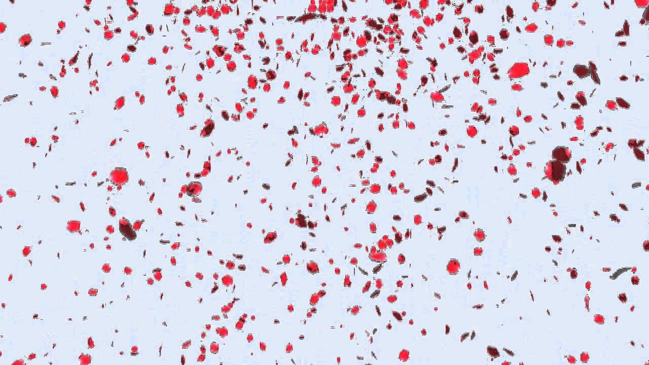 petals fall[hd] - YouTube Petals Falling From A Flower
