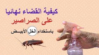القضاء على الصراصير باستخدام الخل الابيض، مقاومة الحشرات المنزلية، الطرق الآمنة بدون كيماويات، فيديو