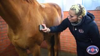 Кремлевская школа верховой езды. Подготовка лошади. Урок №1