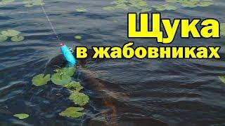 Рыбалка на щуку в жабовнике. Aiko muller 100 и muller 100 slim.