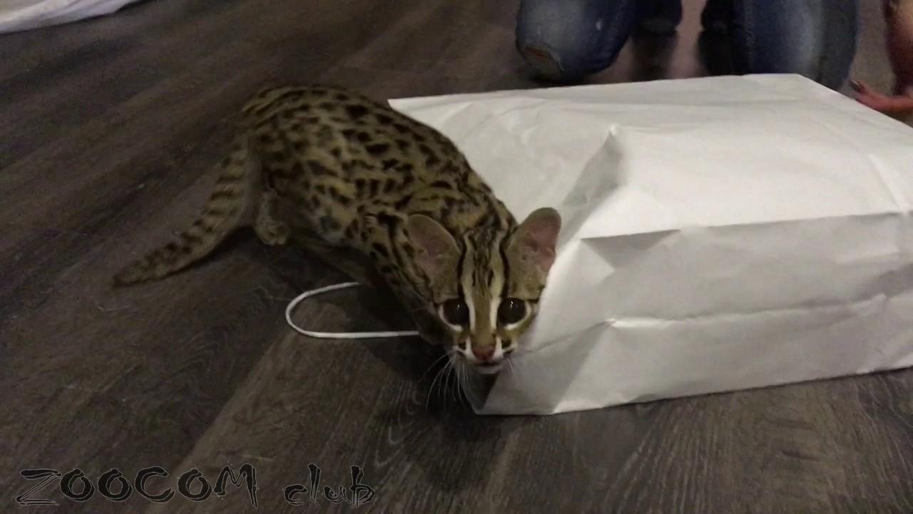 Игры леопардовой кошки Мишки - YouTube