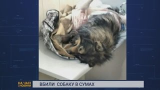 Вбили собаку в Сумах