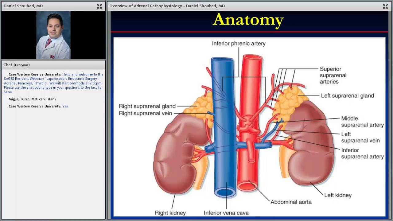 Laparoscopic Endocrine Surgery – Adrenal, Pancreas, Thyroid - YouTube