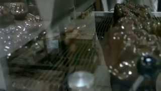 Глазировочная машина Dedy(, 2015-05-27T14:11:17.000Z)