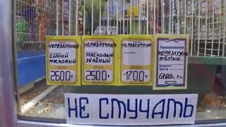 Цена на домашних животных в зоомагазине Великий Новгород  декабрь 2017