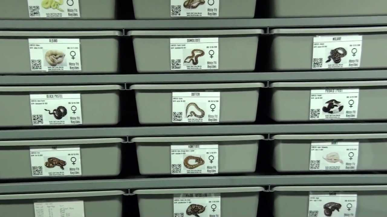 Tv Rack Reptile Id Cards/rack Cards - Youtube