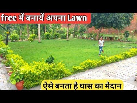 how to grow grass in Lawn || अपना Lawn खुद बनायें