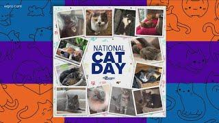 Most Buffalo: 'celebrating National Cat Day'