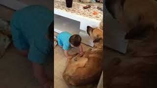 Собака укусила ребёнка жесть