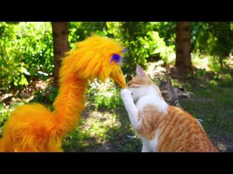 Catsitting cats