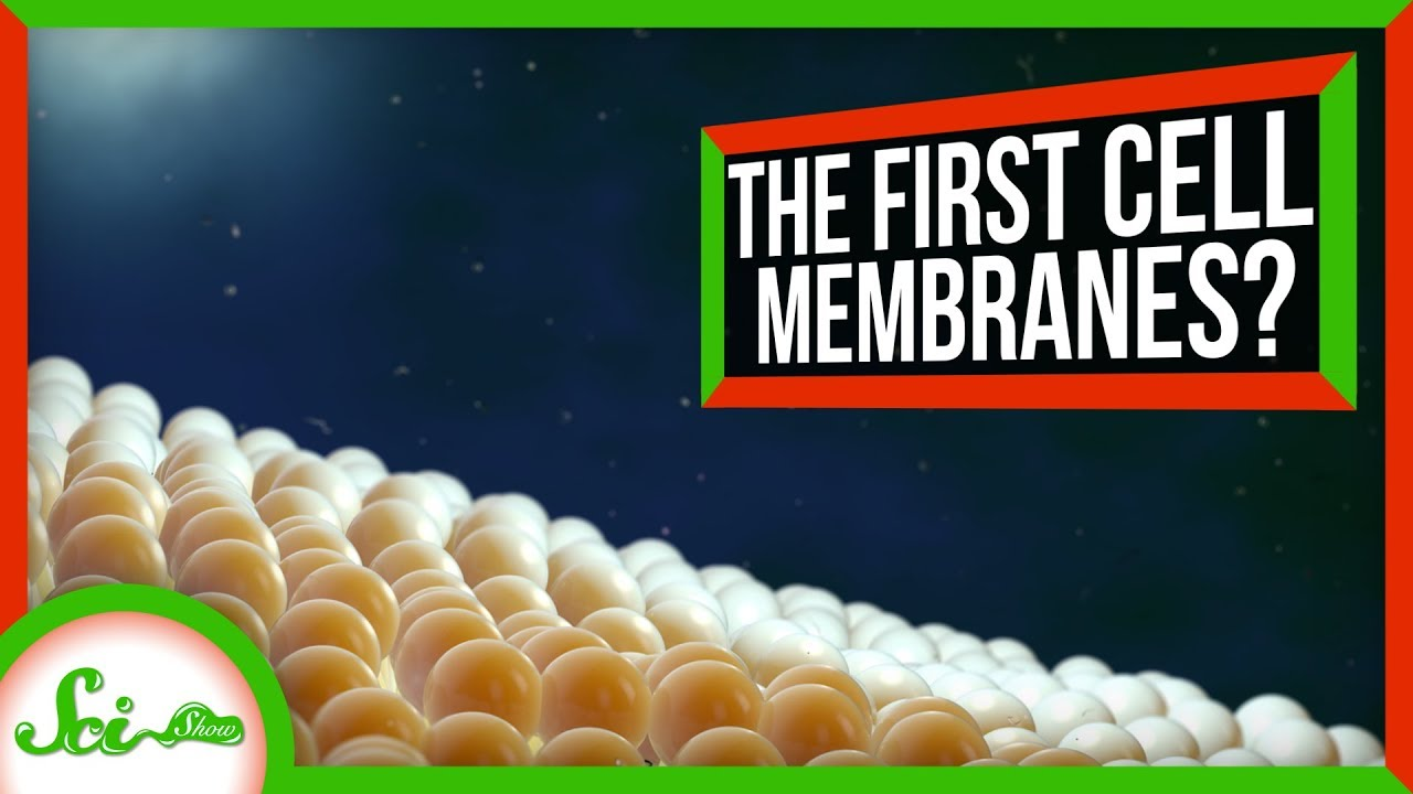 SciShow:How Cells Got Their Membranes (Maybe) | SciShow News