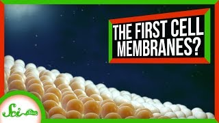 How Cells Got Their Membranes (Maybe) | SciShow News