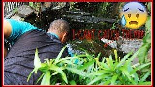 Pleco's In Pond...BAD IDEA!!!