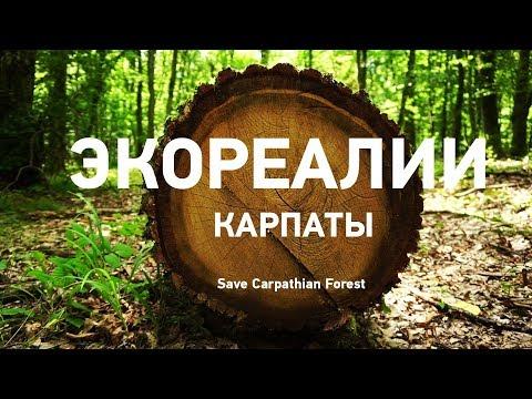 Карпаты в опасности. Будущее уникального Свидовца и вырубка лесов   ЭкоРубрика