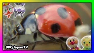 BBQ Japan TV Top 10(上位10) ①PRANK REAL SPIDERS / РЕАЛЬНЫЕ ПАУКИ / リアル蜘蛛のおもちゃ https://youtu.be/vqGK6tKo1Go ②アゲハチョウの幼虫が蝶 ...