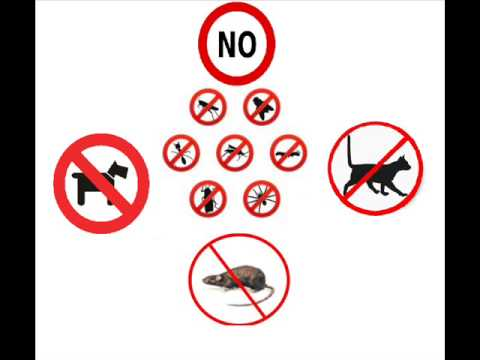 Sound to scare / to banish: dogs, rates, cats, insects, reptiles, birds, mosquitos