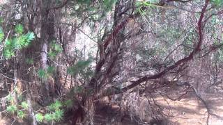 Quick Dirt Ride in Grass Valley, CA. 1080p, Part 2/2