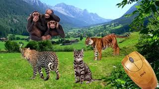 Flora e Fauna da China