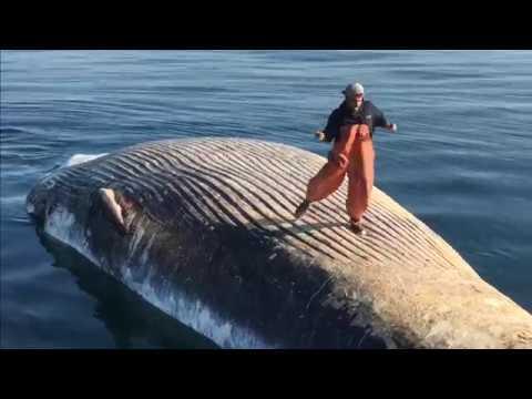 cash me ousside whale dance