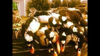 NY DUCK HUNT ON THE PECONIC , DIVERS-DIVERS-DIVERS !!!