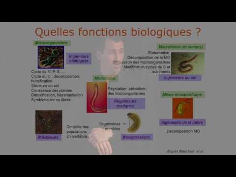 Fonctionnement biologique des sols abondance, diversité et fonctions