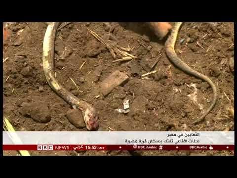 قرية الثعابين منية السعيد بالبحيرة. تقرير عبدالبصير حسن مراسل بي بي سي بالقاهرة