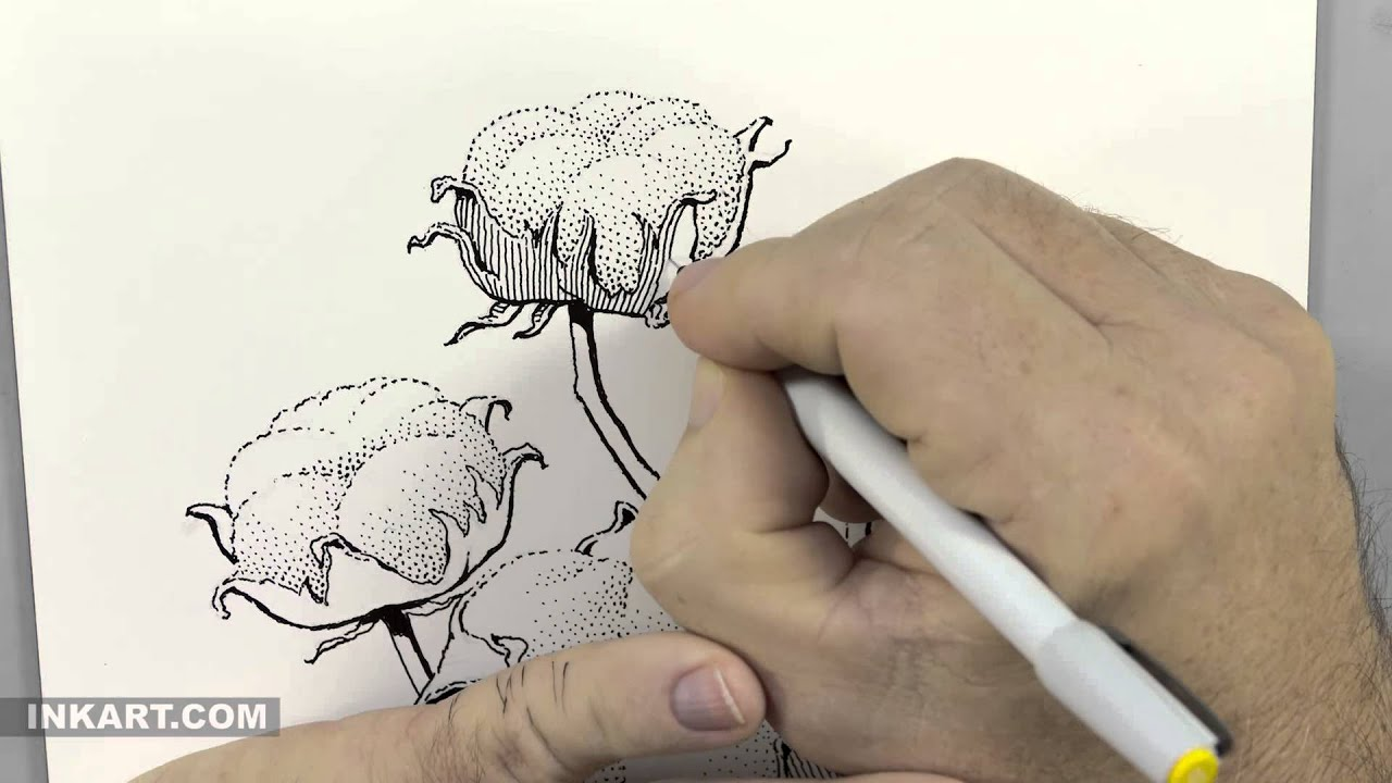 Scratchboard Illustration Of A Cotton Plant Youtube