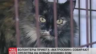 Кошек выселяют: как и почему приют Матроскин искал новый дом? Урал-информ